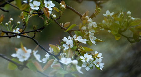 Hoa tháng 4