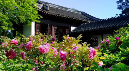 Ngắm hoa mẫu đơn ở vườn Cổ Y Thượng Hải