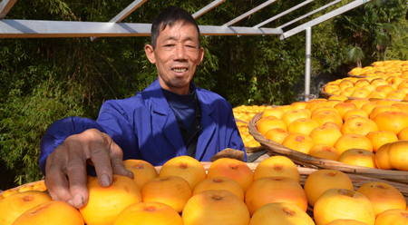 Mứt hồng dẻo nổi tiếng Cống Thành Quảng Tây