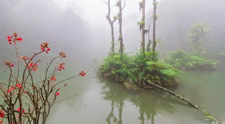 Rừng nhiệt đới huyền ảo trong sương