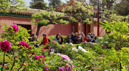Ngắm hoa Mẫu đơn ở Bắc Kinh