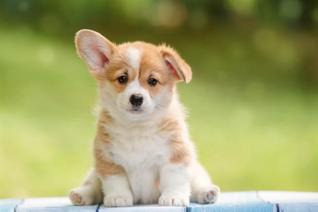 Bài văn mẫu tiếng Trung (25) Tôi muốn nuôi một chú chó con